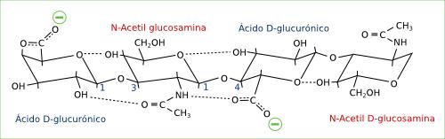 2-hialuronico-enlaces2